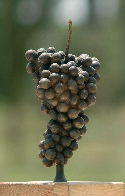 Racimo de uvas. Resina de poliester.